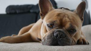 Handstaubsauger schnell Hundehaare entfernen