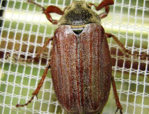 Insektenschutzrollo: Test & Vergleich (07/2020) 5 Insektenschutzrollos