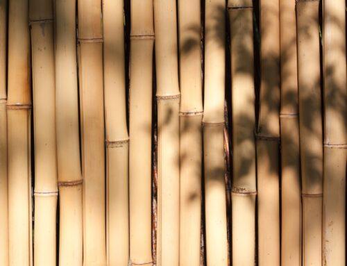 Bambusstab Test 2021: Vergleich der besten Bambusstäbe