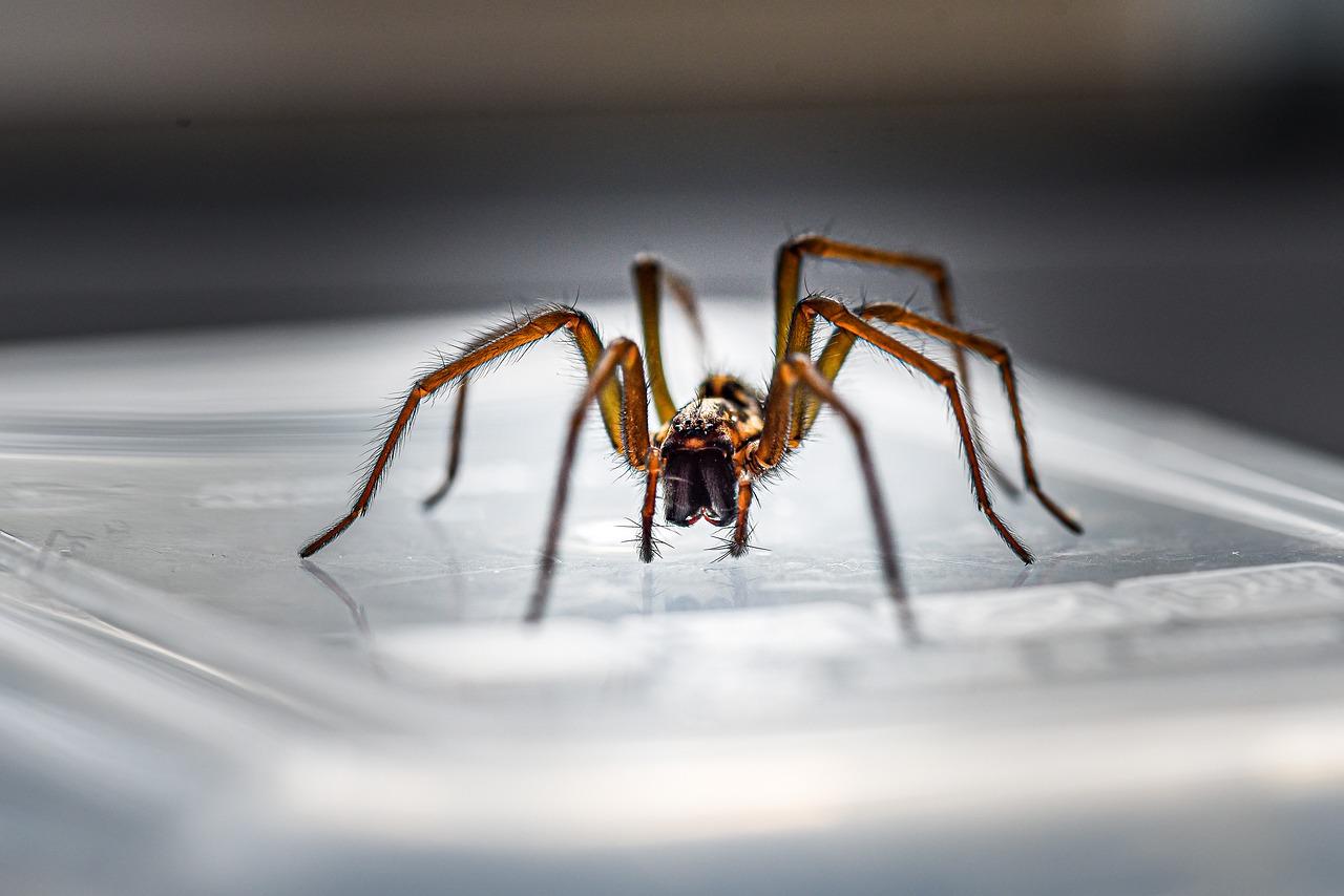 Spinnenfänger Test
