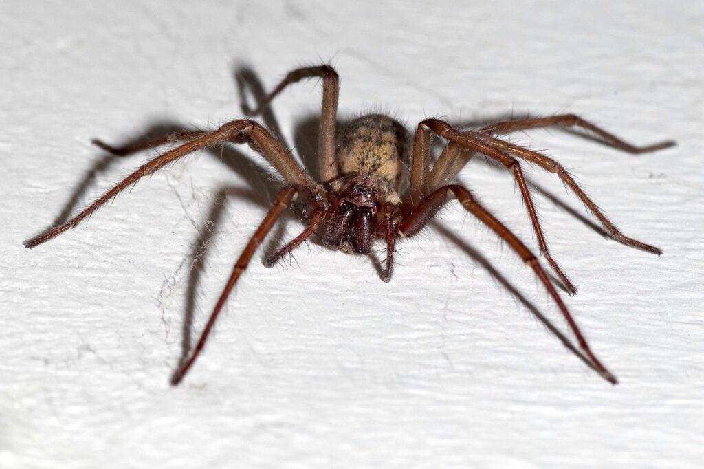 Mit einem Spinnenfänger verhinderst Du den Tod der Spinnen und leistest einen positiven Einsatz für Natur und Umwelt.