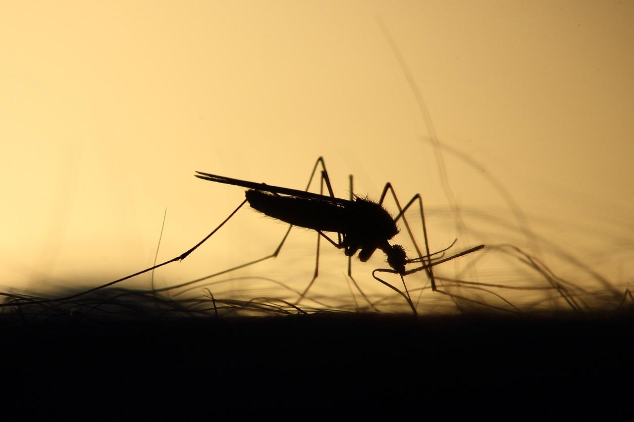 Mückenfalle Test
